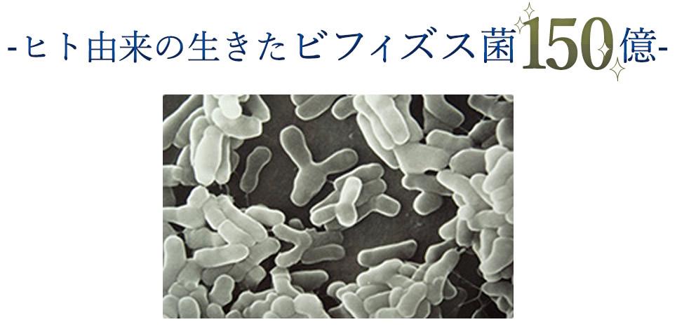 ヒト由来の生きたビフィズス菌150億