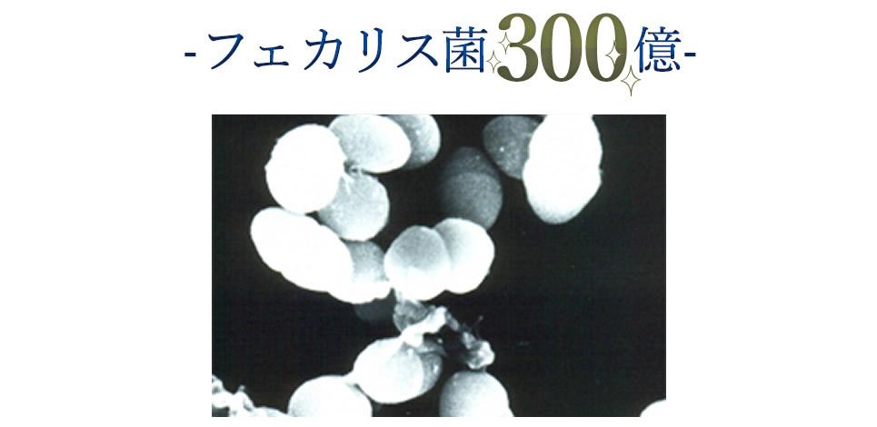 フェカリス菌300億